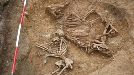 "'Bizarre cow woman' found in Cambridgeshire Anglo-Saxon dig Archaeologists excavating an Anglo-Saxon cemetery in Cambridgeshire say the discovery of a woman buried with a cow is a ""genuinely bizarre"" find. The grave was uncovered in Oakington by students from Manchester Metropolitan University and the University of Central Lancashire. At first it was thought the animal skeleton was a horse. Student Jake Nuttall said: ""Male warriors might be buried with horses, but a woman and a cow is new to us."" He added: ""We were excited when we thought we had a horse, but realising it was a cow made it even more bizarre."" Co-director of the excavation, Dr Duncan Sayer, from the University of Central Lancashire, said: ""Animal burials are extremely rare, anyway. Grave goods including brooches indicated the woman was of high status ""There are only 31 horse burials in Britain and they are all with men"".  Click through to read more about the 'bizarre cow woman'…"