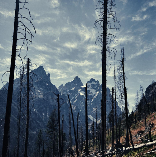 mpdrolet:  Grand Tetons  Christopher DiNottia