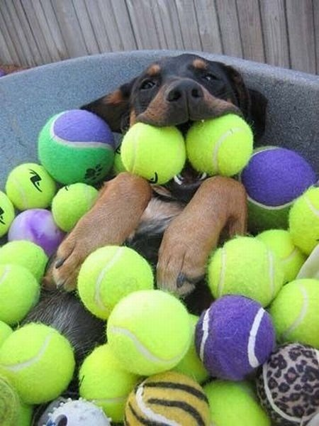 funfoever:  dog and ball! True fun!  (via We need more fun for our boring life | TheFailBlog.org)