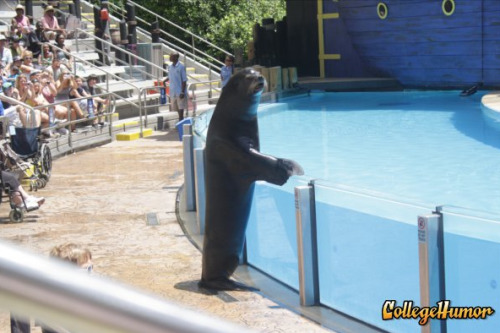 Seal Attends SeaWorld I don't see what the big deal is.