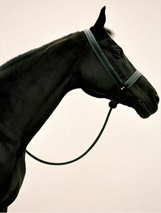 quirkycarousel:  Beautiful Black Horse ~
