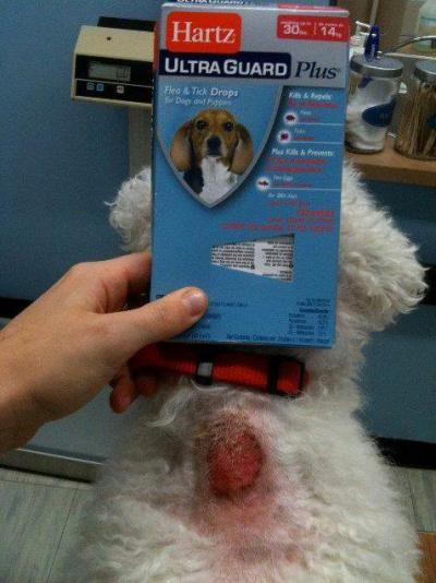 noswagsoever:  atomsbabe:  PLEASE NEVER GIVE YOUR ANIMALS HARTZ PRODUCTS! IT HAS CAUSED NUMEROUS DEATHS IN CATS, and DOGS, it HAS CAUSED BURNS, and SEIZURES, THE VETERINARIAN SAYS IT IS PURE POISON. EVEN THE ANIMAL TREATS! PLEASE PLEASE REBLOG THIS!! YOU MAY SAVE A LIFE!    My boyfriend gives his dog this…. Wtf