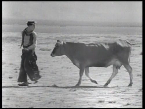 Go West (1925) Buster Keaton I didn't like Go West nearly as much as Seven Chances. There are some good gags with the cow he befriends, but most of the stunts involved herds of animals, and people being disproportionately scared of those herds of animals. Some nice things to look at, but not one of my favorites. #134 - 6/13/2012