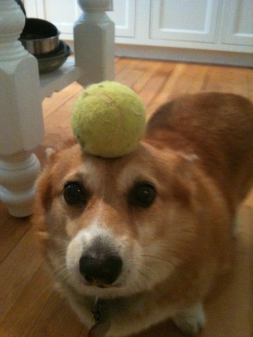 thingsonhazelshead:  Throw? Throw now?