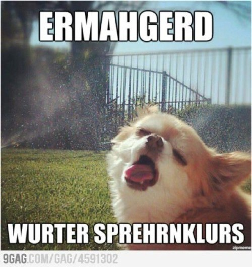 aplacetolovedogs:  Love the face!!  ERMAHGERD is my new fave pet meme.