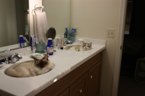 Two cats in two sinks! Double the cuteness! Submitted by Janice.