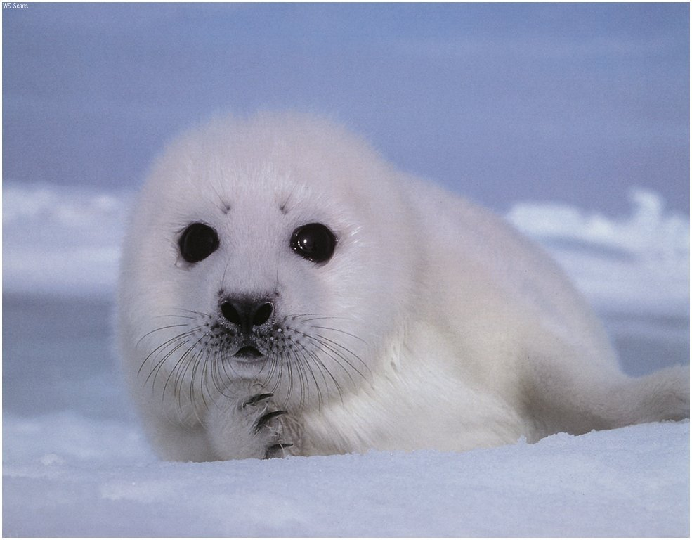 New back up plan in case all else fails: professional seal hunter/clubber. Classier than a stripper, I figured.