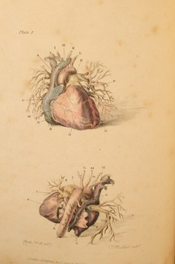 Charles Bell's 'Engravings of the Arteries, Illustrating the Second Volume of the Anatomy of the Human Body…and serving as An Introduction to the Surgery of the Arteries', 1801, pp 50, ten fine full page hand coloured engravings, publishers advertisements at end. via rattlesnakebooks