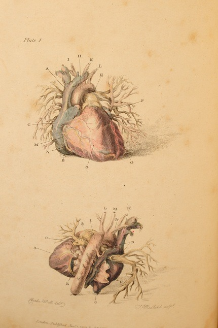 moshita:  Charles Bell's 'Engravings of the Arteries, Illustrating the Second Volume of the Anatomy of the Human Body…and serving as An Introduction to the Surgery of the Arteries', 1801, pp 50, ten fine full page hand coloured engravings, publishers advertisements at end. via rattlesnakebooks