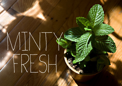 Fresh mint is so easy to grow and makes for a great cup of herbal tea, either hot or cold.  Add some mint leaves to some of your favorite teas and discover mind blowing beverages.  Buy a plant at your local farmer's market or order some seeds online. Enjoy :)