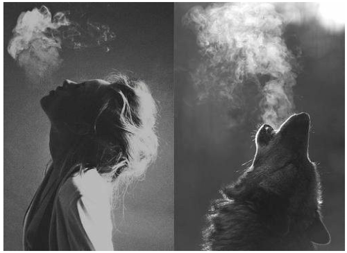 kiiddreamer:  WOLF PACK ISH