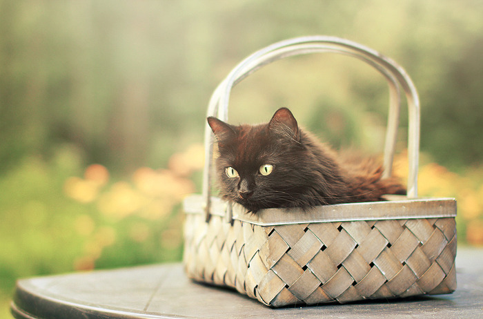 In the basket by ~Thunderi