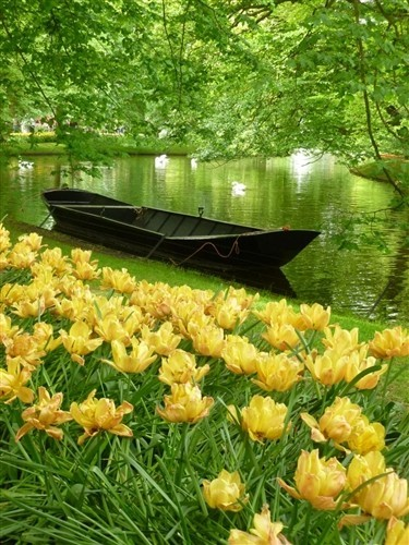 bluepueblo:  Keukenhof Gardens, the Netherlands photo via lori