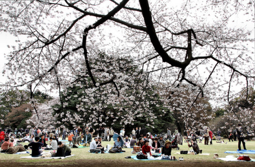 Shinjuku Gyoen O-hanami #1 by kiri-fuda on Flickr.