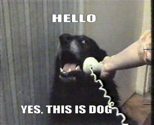 Hello. This is dog.