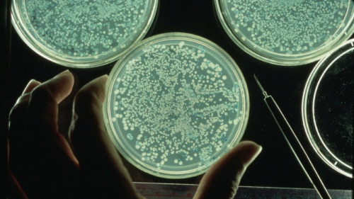 "10 Ways the Human Microbiome Project Could Change the Future of Science and Medicine  When astronomers talk about the number of planets in the Milky Way Galaxy, they talk in terms of hundreds of billions. When microbiologists talk about the Human Microbiome — the bacteria, viruses and fungi living in and on each of our bodies — they talk in terms of hundreds of trillions. Earlier this month, the Human Microbiome Project published the most extensive investigation on the human microbiome to date. And now, we have the clearest picture ever of the microorganisms that call you home — and this knowledge is likely to affect your life in ways you'd never expect. Here are 10 ways that understanding the organisms inside you could change science and medicine forever. 10. Your medical records will list your enterotypeMuch like there are eight different common blood types, researchers announced last year the existence of at least three distinct human ""enterotypes"", or intestinal bacterial communities. Each enterotype is characterized by the predominance of one of three genera: Bacteroides,Prevotellaor or Ruminococcus. Incredibly, the researchers found no link between enterotype and age, nationality, gender, body weight, or even overall health. 9. But enterotypes are just the beginningRemember: ""enterotype"" refers solely to the microbiota of the gut, but your microbiome extends throughout and over your entire body. Doctors could therefore consider more than just your enterotype when consulting your medical records; they could reference a much larger picture — one that encapsulates the various ecosystems that support your entire body. The phylogenetic tree featured here, for example (borrowed from this outstanding New York Times feature) gives an overview of the microbes found in or on human ears, vaginas, noses, tongues, teeth and cheeks. Your body is a whole wide world universe of microbial life. 8. Doctors could use your microbiome to custom tailor medical treatmentsAnd yet, every person's microbial universe is different; for example, a bacterium that dominates the ecosystem of one person's mouth can be missing entirely from someone else's. Researchers suspect that the differences in our microbial makeups could allow doctors to custom tailor their diagnoses and treatments. The potential for personalized medicine could be huge. 7. Treat the microbiome by fortifying its allied forcesA person with a bacterial infection in her gut could be said to be in possession of an out-of-balance bacterial ecosystem; somewhere in her intestines, a rebel faction of bacteria is wreaking havoc. One potential form of therapy: manipulate the dynamics of said ecosystem by pitting one (or several) species of virus, bacterium or fungus against another. A more intimate understanding of the microbiome will allow us to understand how microbial species interact to maintain a healthy, balanced environment (be it in your mouth, your gut, or on the surface of your skin), and how to fix that balance when things get thrown off kilter. 6. A solution to the growing problem of antibiotic resistance?Antibiotic resistance is becoming a more serious issue by the day, due in no small part to the widespread use of broad spectrum antibiotics, which wipe out our bodies' good bugs and bad bugs indiscriminately. With a greater understanding of the microbiome could come microbe-boostingtreatments like the ones mentioned above, providing doctors with powerful (and effective) alternatives to antibiotics. In fact,it's already been shown to work in cases ofClostridium difficile infection. (Note that, because the microbiome comprises not just bacteria, but viruses and fungi, these treatments wouldn't necessarily be limited to probiotics.) 5. An end to the war on germsBy treating our microbiomes like ecosystems — equipping it with the resources it needs to sort itself out rather than attacking it, guns blazing — some researchers hope to usher in a new way of thinking about our relationship with bacteria and other microorganisms. ""I would like to lose the language of warfare,"" said Julie Segre of the National Human Genome Research Institute in an interview with Carl Zimmer, who has written extensively on the subject of the human microbiome. ""It does a disservice to all the bacteria that have co-evolved with us and are maintaining the health of our bodies."" 4. Blur the line dividing Humanity from NatureTo quote another, different Zimmer article:  Microbes defy a simple notion of individuality. They are essential to our biology, and they travel with us from birth to death. Yet they also flow between us, and can be found in water, food and soil.  In other words, many of the microorganisms that live in and on our bodies can also be found thriving in nature. Because microbes are continuously entering and leaving your body; in many ways, ""your"" microbiome, while essential to your individual health, extends beyond the confines of your body. The more we understand about the human microbiome, the more we come to realize that everything is, in fact, like, totally connected, man. 3. Treating one person could affect manyOur microbes connect us all. Since these organisms don't stay confined to any one body, any bugs specifically chosen to treat a person's ailment have the potential to affect those in that person's surroundings, as well. (It's not a perfect analogy, but think of how genetically modified crops are susceptible to spreading to non-GM fields via seed-dispersal). Would roving microbes necessarily be a problem? Doctors aren't sure yet — but they have the potential to raise a number of bioethical concerns. 2. Do you own your microbes?For instance, here's a great thought experiment, from the same Zimmer article as above:  Imagine a scientist gently swabs your left nostril with a Q-tip and finds… a previously unknown [bacterial species] that produces a powerful new antibiotic. Her university licenses it to a pharmaceutical company; it hits the market and earns hundreds of millions of dollars. Do you deserve a cut of the profits?  We've just discussed how our microbiomes are what connect us all — not just with nature, but with one another. But we've also established that our microbiomes are very much a part of who we are as individuals. The viruses, bacteria and fungi living in your nostrils are very different from the ones living in mine; who's to say the bacterial species that produces this powerful new antibiotic didn't evolve by trading genes with the specific combination of bugs located in yournostrils? Then again, who's to say they evolved in your nostrils in the first place? 1. Your microbiome profile will be kept privateOne way to determine if the bacterial species discovered in your nostril evolved in your nose, specifically, would be to look for it in the noses of everyone else. It sounds like a ridiculous feat because it is. For one thing, it would require for the microbiome of every person on earth to be catalogued in a worldwide database. People would need to have their microbiomes updated on a regular basis to account for shifts in the dynamics of their various corporeal ecosystems. Add to this the fact that the genes of your microbiome are thought to outnumber your own by a hundred to one, and your looking at a logistical nightmare — not to mention a technical impossibility. And even if such a database did exist, you'd still presumably need permission from every single person on Earth to make any comparisons; many researchers argue that your microbiome, like your genes, should remain private, protected information."
