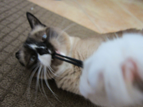 I will destroy your camera strap!