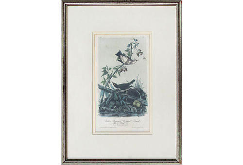 Framed Antique Audubon Lithograph on One Kings Lane Vintage & Market Finds by Ruby + George- $549 SOLD!