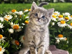 Some daisies and a kitten ♥what could be cuter than that ?