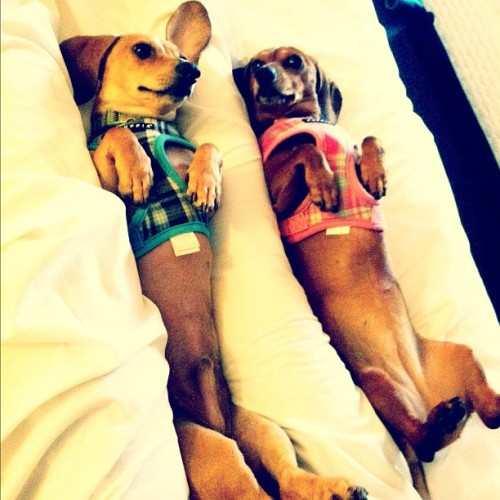 hellocute:  submitted by dachshunds:  Harry & Ginny living the life.   eep!  adorable!