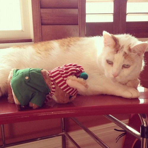 I'm #planking in front of General Little Lion. Is he amused? Let me know as I am #planking facedown & cannot see him react #lol ~sechri #instamouse #travel #stories #catsofinstagram #kitty #cats #lolcats cc @#omgplanks  #wishuwerehere  (Taken with Instagram at Sechri's Bachelor Pad)