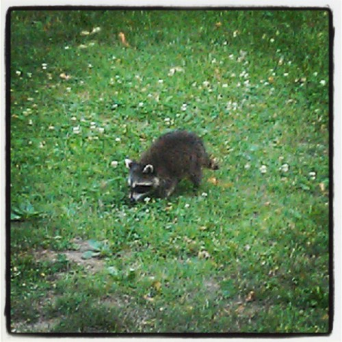 We had a baby come to visit. #wildlife (Taken with Instagram)