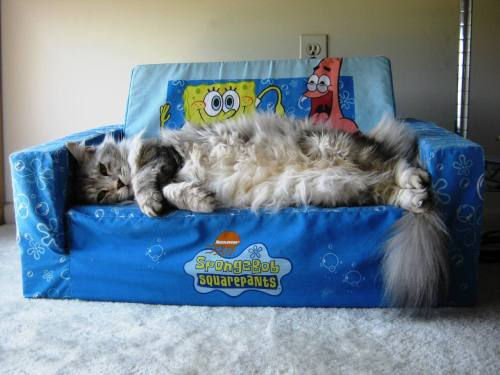 "Maryland Cat Regrets Buying Spongebob Couch Isabella, a 4-year-old Maine Coon from Pikesville, MD, put a lot of thought into designing her living room. From the carpet to the paint color to the ornaments on the mantle, every element fell right into place — except one. ""She always second-guessed the Spongebob couch,"" says Loraine Thach, a close friend. ""Everything about the room screams modern elegance. And then she puts a cartoon couch right in the middle. I knew she wouldn't be happy with it."" Submitted by Eileen."