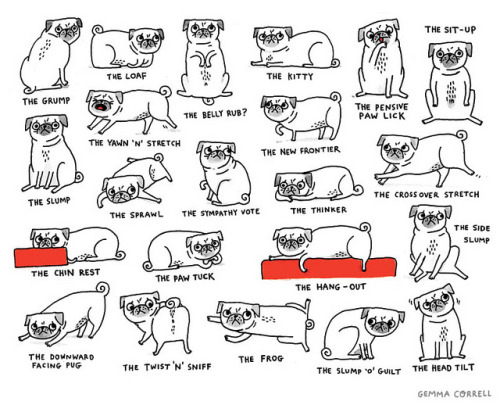 lolitserica:  Pug Positions by gemma correll on Flickr.