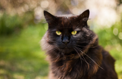 photogenicfelines:  Cat III (by JTR99)