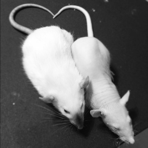 Ratty love forever. [Foster, left and Asgard, right]