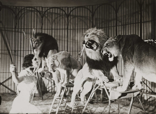 A lion tamer at Bertram Mills Touring Circus, Ascot by National Media Museum on Flickr.Look at the photo. Consider what has has just happened here, or what is about to happen here. Who has been here? Who will come here and and what will they do? What kinds of interactions can you imagine? Write one leaf about these or other things that occur to you upon looking at the picture. Do not allow yourself to be limited by what you see. Go.| Write One Leaf + about + ask + random + facebook + twitter | sponsors + You Are a Dog [ Kindle | Google | iBookstore ]