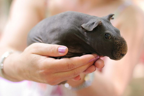 kungfuqua:  hippo by alina_gerika on Flickr.