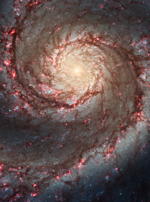 the-astronomyblog:  Hubble ACS Visible Image of M51