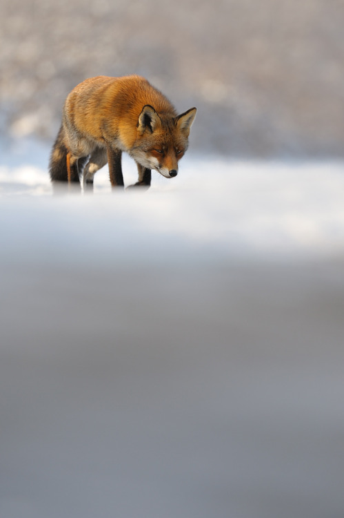 llbwwb:  I'll keep an eye on you. by Edwin Kats
