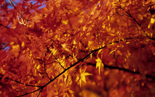 japan.unazuki.112304.fujivelvia100.r4.15 by ommphoto on Flickr.