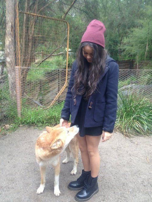 Did just pat & feed a real dingo!