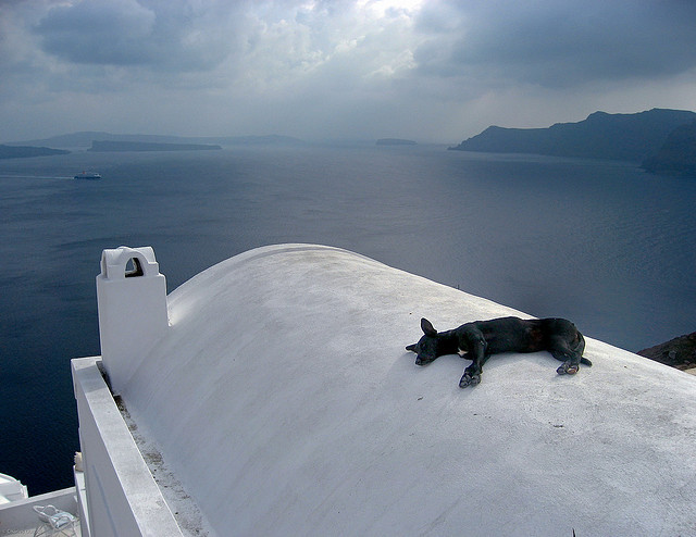 doggy bliss on a roof by potomacpix on Flickr.