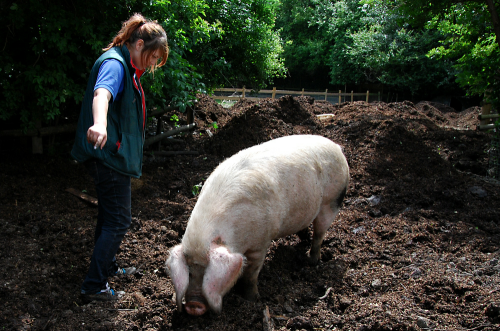 'christy telling a pig where to go'