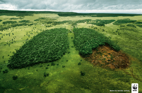 Before it's too late. WWF.org
