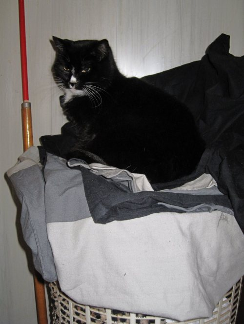 get off of there cat. you are not laundry. i will not put you in the washing machine. you wouldn't like that anyway.