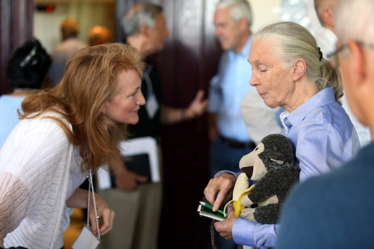 Jane Goodall at the Halki Summit Over the course of three days on the island of Heybeliada across from Istanbul, our host Krista Tippett moderated a plethora of panels at the Halki Summit on Global Responsibility & Environmental Sustainability. One of the keynote speakers we found so endearing was primatologist Jane Goodall, whom may give Justin Bieber or Bono a run for his money in the world of superstar fandom. It seems that there was no one present who wasn't captivated by her presence. We recorded her keynote address and will try to make the audio available later this week. Photo by Trent Gilliss