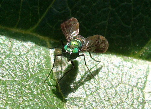 tiny fly on Flickr.