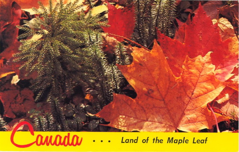 O CANADA!  July 1 is CANADA DAY! BAD POSTCARDS will celebrate with some Canadian postcard gems. (BAD POSTCARDS is specifically devoted to United States postcards, but I have snuck a few Canadian ones into the blog.) Enjoy these vintage postcards from an era when the holiday was called DOMINION DAY. (Changed to Canada Day in 1982.) The Canada-themed week will begin on Sunday, July 1 and continue through Friday, July 6. Of course, Canada will have to be pushed aside on Wednesday, July 4 for an All-American Independence Day postcard.  Canada…Land of the Maple Leaf Across the vast regions of Canada and throughout the world, the Maple Leaf is recognized as the symbol of this proud nation. The Maple is most beautiful in Autumn with hues of red, gold, yellow and bronze. The multitude of colour is typical of the variety and beauty of Canada from the Atlantic to the Pacific, from the Arctic to the Great Lakes.
