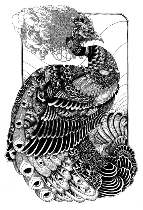 iainmacarthur:  Peacock print done for phone booth gallery 2008 pen Iain Macarthur