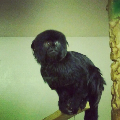 Sad marmoset…xo! (Taken with Instagram)