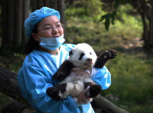 Oh, love.  mothernaturenetwork:  Photo of the day: Panda salutations