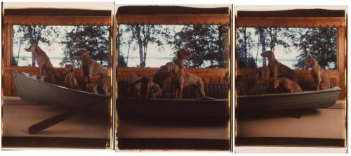 William Wegman Crossing, 1991
