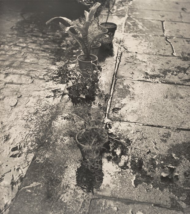 yama-bato:  Ilse Bing,  Untitled (Plants at Gutter, Paris), 1952; photograph; gelatin silver print, 18 in. x 16 in. (45.72 cm x 40.64 cm); Collection SFMOMA, Bequest of Ilse Bing Wolff; © Estate of Ilse Bing Source: http://www.sfmoma.org/explore/collection/artwork/105822##ixzz1yvWOSqHB San Francisco Museum of Modern Art