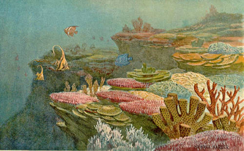 rhamphotheca:  Ancient Coral Reefs (ca. 1920) by Heinrich Harder from The Wonderful Paleo Art of Heinrich Harder.