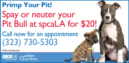 Primp Your Pimp! $20 Pit Bull spay or neuter surgeries, while funding lasts. Includes a free nail trim! Call the spcaLA Spay/Neuter Center NOW to make an appointment (323) 730-5303.
